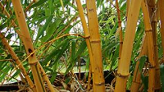 Randijk Bamboe en Hoveniers